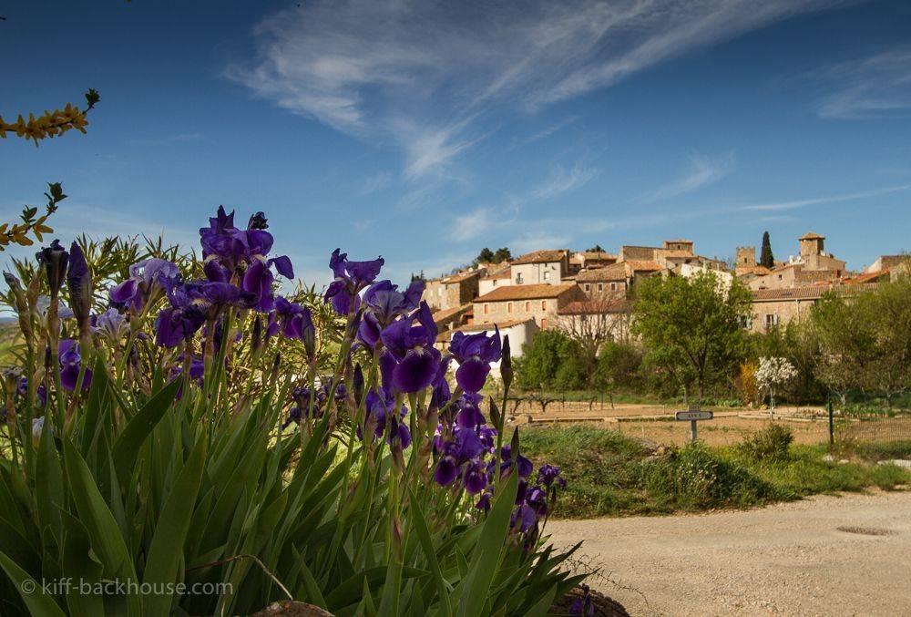 Spring Irises 3
