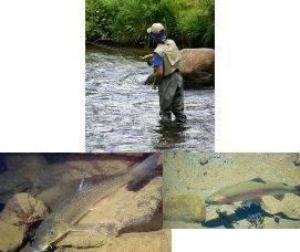 La pêche a Agel