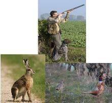 La chasse å Agel
